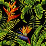 Piante tropicali che dipingono fondo senza cuciture Immagini Stock