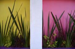 Piante tropicali contro le pareti Colourful fotografia stock libera da diritti