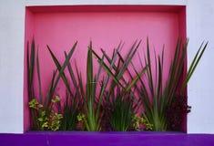 Piante tropicali contro le pareti Colourful immagine stock