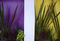 Piante tropicali contro le pareti Colourful immagini stock libere da diritti