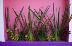 Piante tropicali contro le pareti Colourful fotografia stock