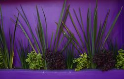 Piante tropicali contro le pareti Colourful immagini stock