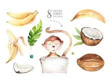Piante tropicali dell'acquerello disegnato a mano messe e scimmia Foglie di palma, albero esotici della giungla, elementi tropica Fotografia Stock