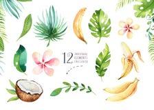 Piante tropicali dell'acquerello disegnato a mano messe Foglie di palma esotiche, albero della giungla, elementi di botanica del  illustrazione vettoriale