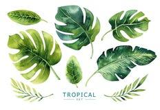 Piante tropicali dell'acquerello disegnato a mano messe Foglie di palma esotiche, J Immagini Stock Libere da Diritti