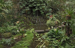 Piante tropicali differenti nella grande casa di palma del Palmengarten, Francoforte Germania Immagini Stock