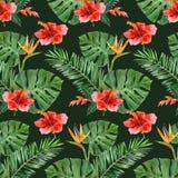 Piante tropicali disegnate a mano senza cuciture Fotografia Stock Libera da Diritti