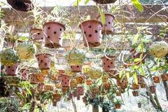 Piante tropicali e botanica fotografia stock