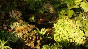 Piante tropicali e cascata in bello giardino Varie piante tropicali verdi che crescono vicino alla piccola cascata con fresco archivi video