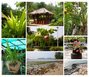 Piante tropicali e paesaggi Fotografie Stock
