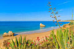 Piante tropicali e vista della spiaggia Fotografie Stock Libere da Diritti