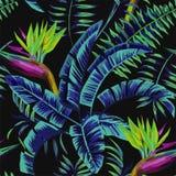 Piante tropicali nella notte della giungla Fotografie Stock