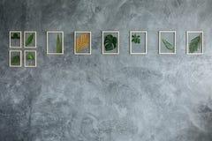 Piante tropicali sulla parete grigia Fotografia Stock