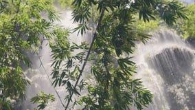 Piante tropicali verdi sulla cascata scorrente della montagna del fondo in cascata tropicale della foresta pluviale in giungla e  video d archivio