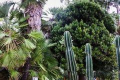 Piante in un giardino botanico a Ginevra Fotografia Stock