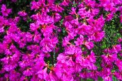 Piante in un giardino botanico a Ginevra Fotografie Stock Libere da Diritti