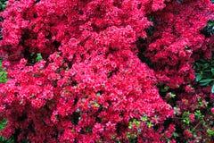 Piante in un giardino botanico a Ginevra Immagini Stock Libere da Diritti