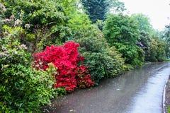 Piante in un giardino botanico a Ginevra Immagine Stock