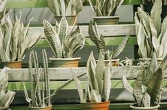 piante in vasi nel giardino Fotografia Stock