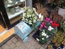 Piante in vasi per la piantatura del negozio di fiori Fotografia Stock Libera da Diritti
