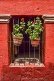 Piante in vaso e fondo rosso Fotografie Stock Libere da Diritti