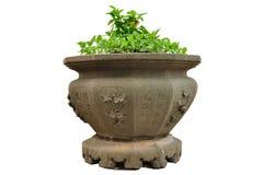 Piante in vecchio vaso da fiori isolato su fondo bianco, percorso di ritaglio. Immagine Stock