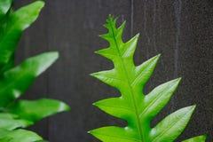 Piante verde intenso naturali che sporgono nell'aria, restituente ossigeno Queste piante tropicali vicino allo stagno ed al grani Fotografia Stock Libera da Diritti