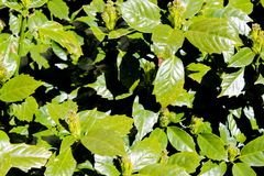Piante verdi fotografie stock