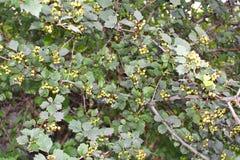 Piante verdi fotografia stock