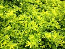 Piante verdi Immagine Stock
