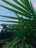 Piante verdi Immagini Stock