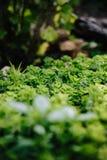 Piante verdi al sole Fotografie Stock