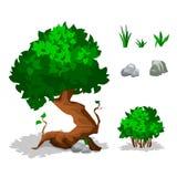 Piante verdi Alberi, cespugli, erba e pietra Immagine Stock