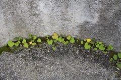 Piante verdi che crescono dal calcestruzzo immagine stock libera da diritti