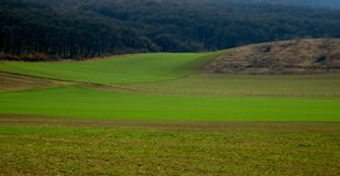 Piante verdi che crescono dalla terra accanto alla foresta fotografia stock