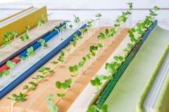 Piante verdi che crescono in pagine del libro Fotografie Stock Libere da Diritti