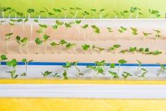 Piante verdi che crescono in pagine del libro Fotografie Stock