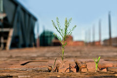 Piante verdi che crescono su un vagone di legno del treno merci immagine stock libera da diritti