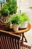 Piante verdi conservate in vaso Fotografia Stock