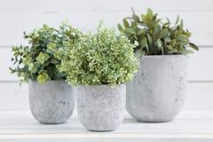 Piante verdi del vaso immagine stock