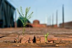 Piante verdi della natura incredibile che crescono su un treno merci di legno fotografia stock libera da diritti