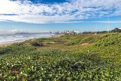 Piante verdi della vegetazione e dell'aloe della duna sulle dune della spiaggia Fotografie Stock