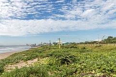 Piante verdi della vegetazione e dell'aloe della duna sulle dune della spiaggia Immagine Stock
