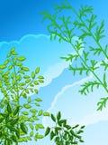 Piante verdi e cielo Immagine Stock