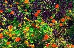 Piante verdi e fiori giallo arancione e porpora insieme fotografia stock
