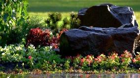 Piante verdi e rocce archivi video