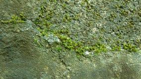 Piante verdi in foresta Immagini Stock