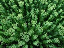 Piante verdi nella sosta Fotografie Stock Libere da Diritti
