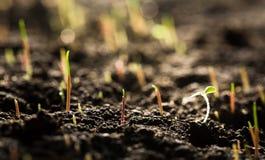Piante verdi nella vista del primo piano del suolo immagine stock libera da diritti
