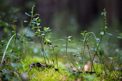 Piante verdi per la vostra progettazione Fotografia Stock Libera da Diritti